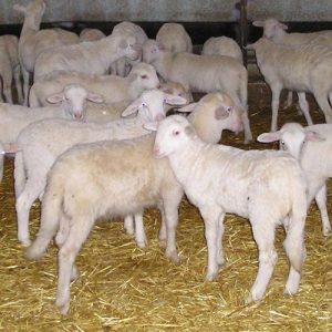 Alimentación animal piensos-compuestos OC-ESP. Leycesa