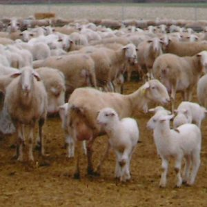 Alimentación animal piensos-compuestos OP-SM. Leycesa