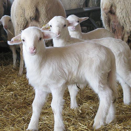 Alimentación animal piensos-compuestos preparto.Leycesa